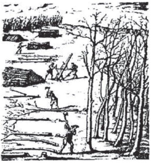 Гравюра: бригадный метод лесозаготовок